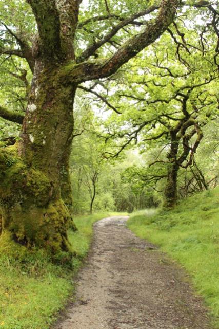 Strontian Oak Woods